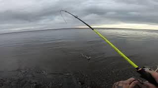 Рыбалка.Хозяин реки порадовал..