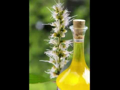 niaouli-oil-health-benefits
