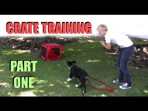 dog training test questions