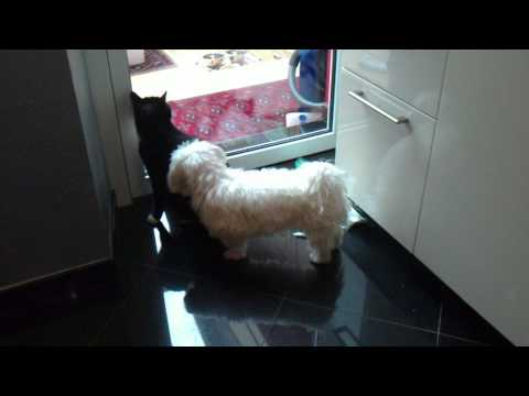 Female dog will xxx with male cat awesome end