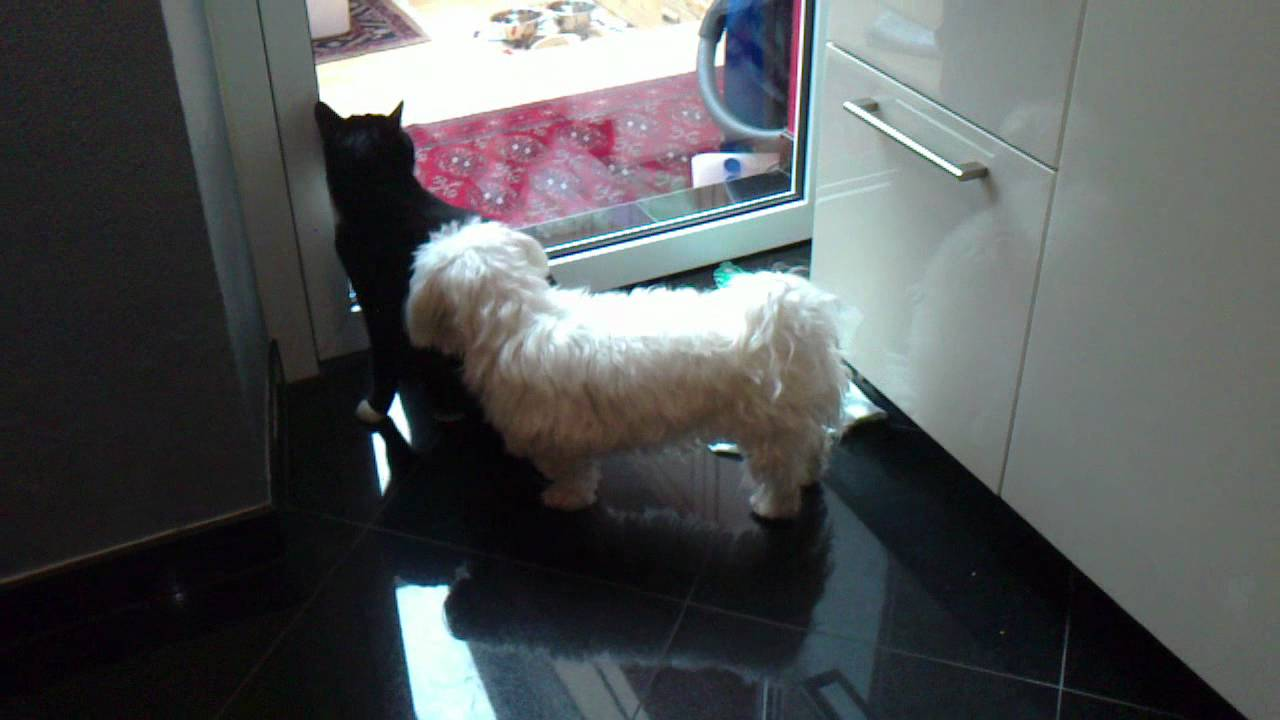 Female Dog Will Xxx With Male Cat Awesome End - Youtube-2883