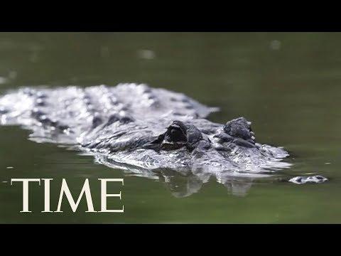 Aimee - Beware of Meth-Gators