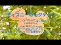 ディズニー 35周年 2018 七夕デイズ  スペシャルプログラム ☆ウィッシングプレイスで星に願いを☆ &スペシャルグッズのご紹介