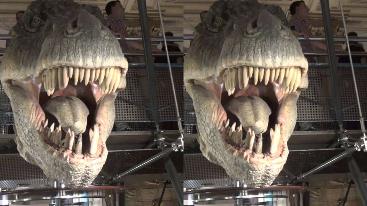 hd 3d dinosaurs in the natural history museum  london
