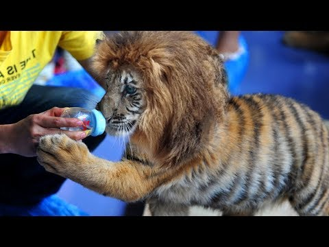 Most BIZARRE Animals That Shouldn't Exist!