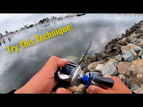 San Diego Fishing From Shore -