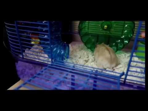 R.I.P Hammy FaZe Rugs Hamster best