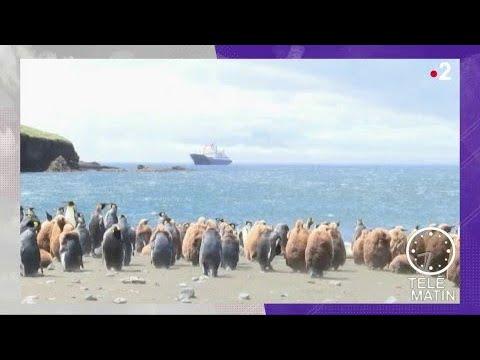 Actu Plus - Les territoires ultramarins