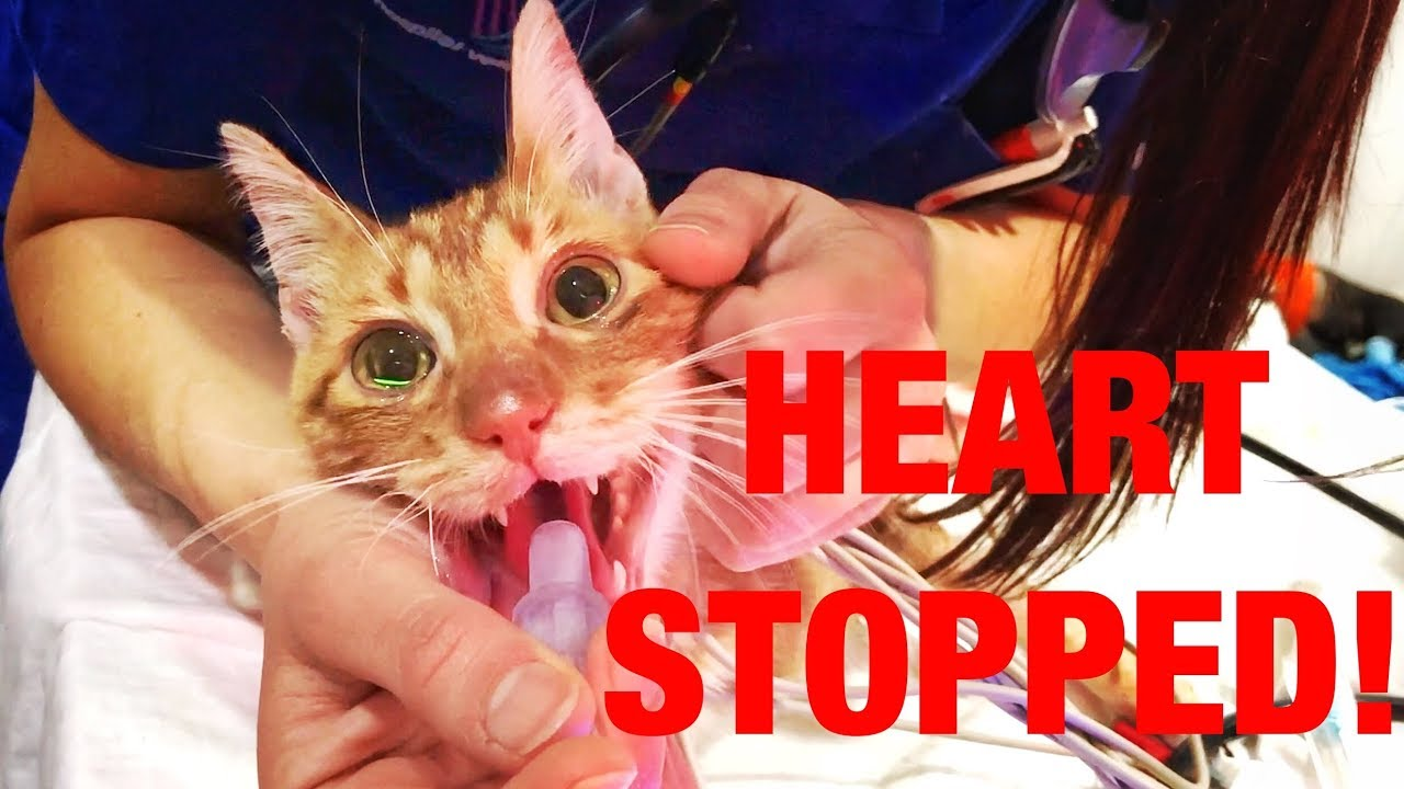 his-heart-stopped-for-5-minutes-please-share