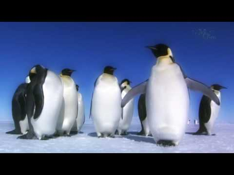 Documentary Amazing Beauty Of Nature Under Ice   Antarctic   HD Nature Documentary