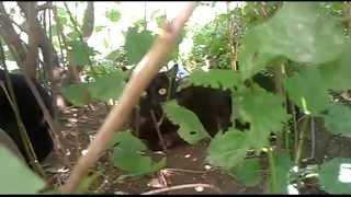 Черная кошка и ее черныш