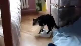 Кота штырит после конопли