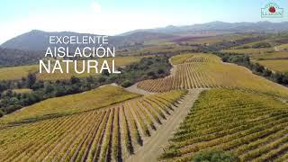 Agricola Llahuen: Procesos en la producción de plantas de frutilla