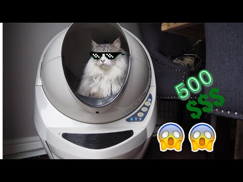Spoilt Mainecoon Reacts To New $500 Litter Robot