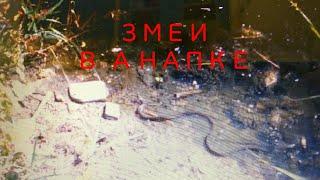 видео Речка Анапка