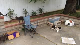 Gambar cover 16 6 24 2 Cat Farm