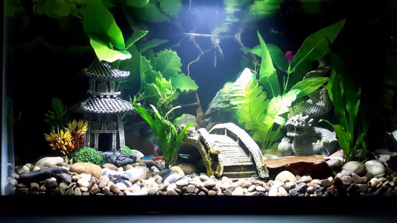 New koi betta fish tank and beginner tips youtube for 10 gallon koi tank