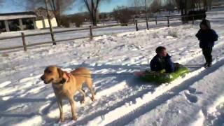 Dog pulling kids on sled