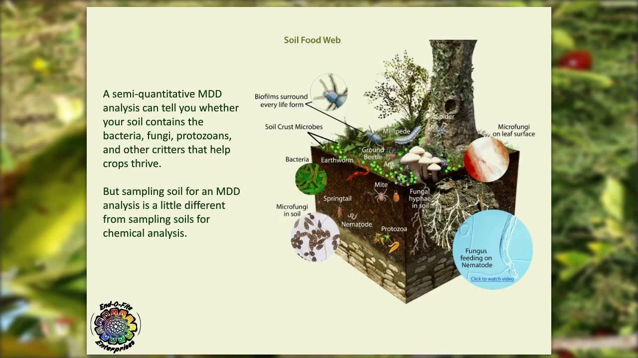 mdd test of soil pdf