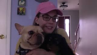 Meet Rosie, the Cavalier King Charles Spaniel puppy!