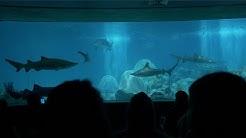Odysea Aquarium First Look l Scottsdale, AZ