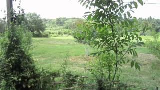 Video 1: Farming in Greece