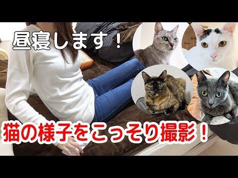 飼い主が昼寝をしたときの猫たちの行動を撮ってみた