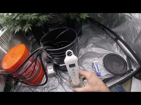 Cannabis communicates nutrient needs! Huge Secret to DWC success!