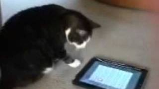 Spazz   cat goes crazy for ping pong on ipad touch !! Thumbnail