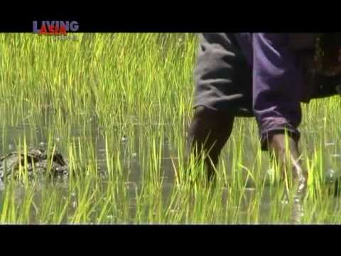 TRAVEL GUIDE:  KALINGA  | Living Asia Channel