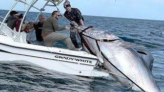Удивительный самый быстрый навык ловли гигантского синего тунца - Потрясающая большая ловля на море