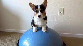 HEALTHY FITNESS PUPPY - Life After College: Ep. 328 thumbnail