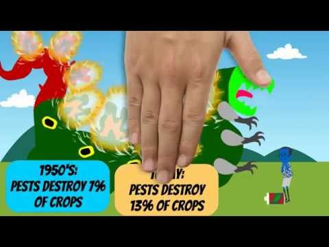 A Zest for Pests…Pesticides, the Environment, and You