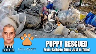 Puppy Dying on Garbage Dump & @Viktor Larkhill Is There To Rescue Vania
