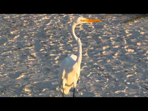 Follow the Heron -  North Sea Gas
