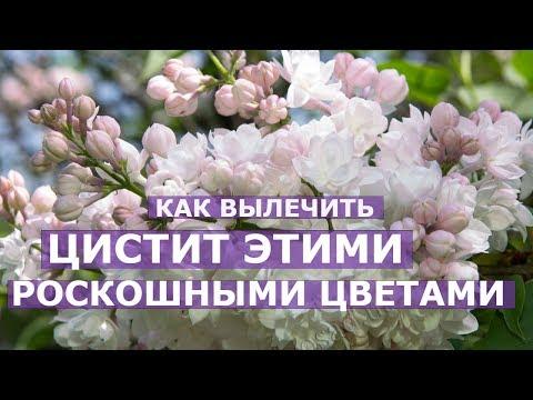 Народное лечение пяточной шпоры народными средствами в
