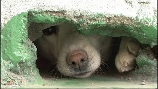 Rescue Of Dogs Living In The Eaves Of A Roof | Kritter Klub