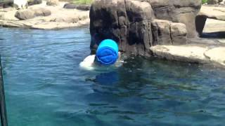 Columbus Zoo Polar Bear 2012 pt2 Thumbnail