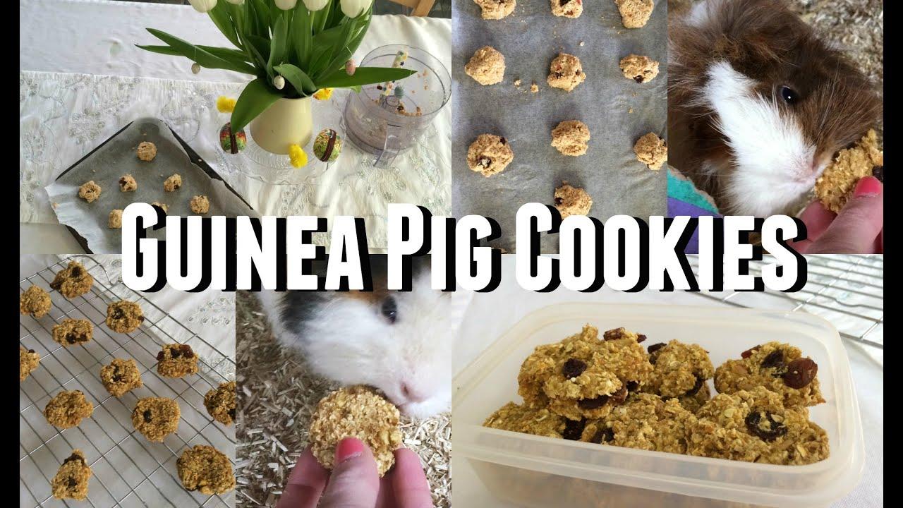 Dog Food Recipes On Youtube