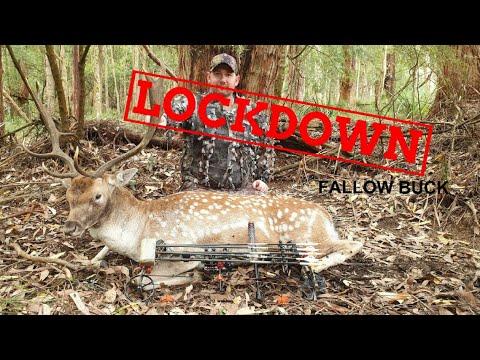 Australia Lockdown Fallow Deer Bow Hunt 2020!