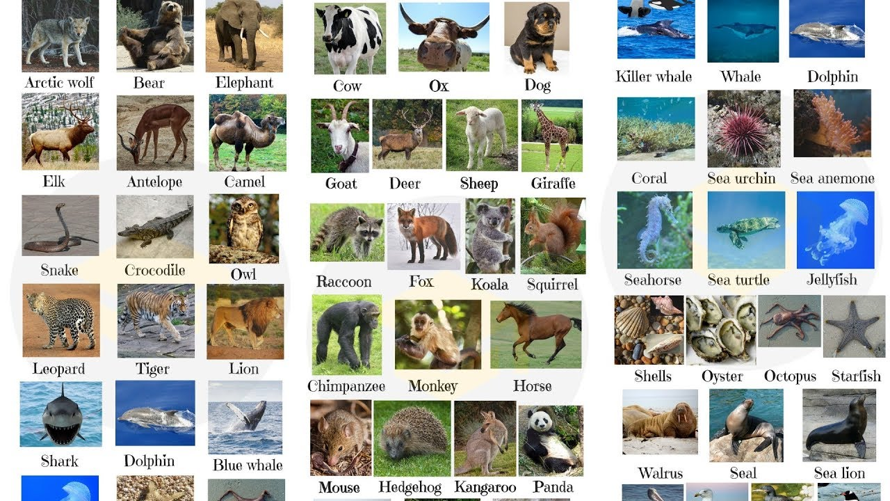 List of Animals! Learn 100+ Animals with Pictures | Animal Names in English for Kids