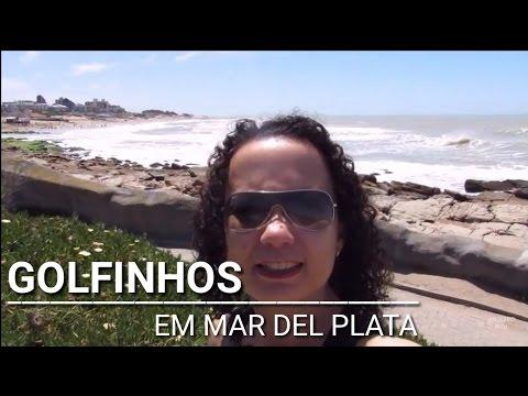 Aquarium de Mar del Plata - Argentina   Vlog em português   Arquivo Miri