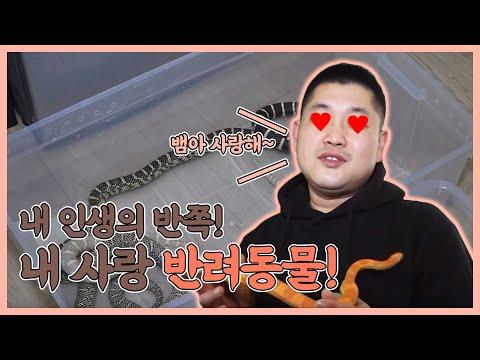 [생생투데이-창원] 내 인생의 반쪽! 내 사랑 반려동물!! - ② 뱀 편 (2017.03.14,화)