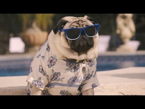 Vision Direct Summer Advert 2016 – Gizmo's Summer Adventure