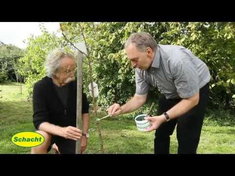 Apfelbäume natürlich vor dem Frostspanner schützen