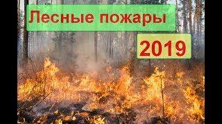 Лесные пожары.Горит камыш на реке.