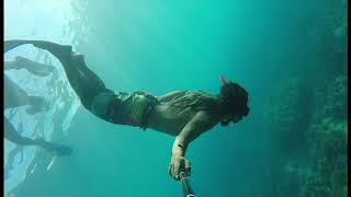 Video Beautiful Dive Freediving Thailand #GoogleThisHashtag download MP3, 3GP, MP4, WEBM, AVI, FLV Mei 2018