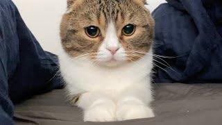 ベッドでゴロゴロしていたらモチモチな猫が甘えにやって来ました!