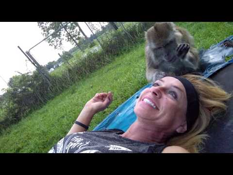 Macaque Slap's