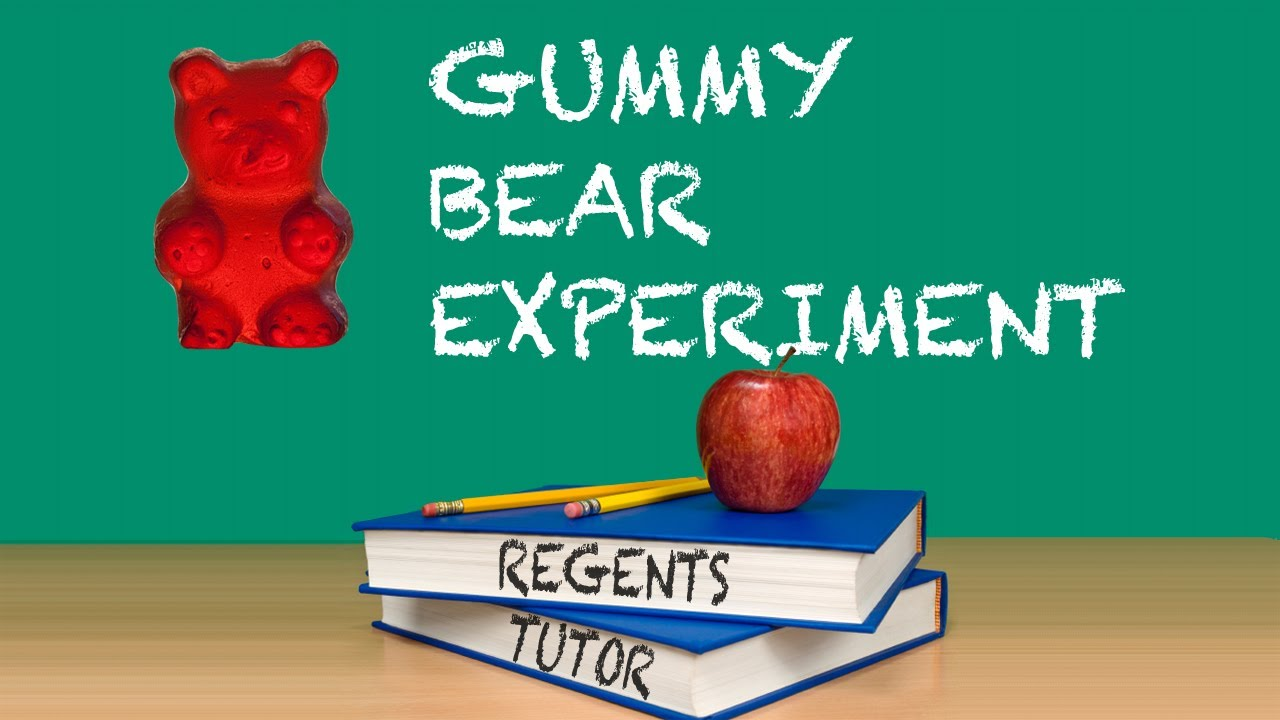 gummy bear experiment Growing gummy bears experiment explanation (teacher background) and vocabulary reminder: teachers, you get to run this experiment with your students please read through this explanation and vocabulary sheet as well as the experiment itself.